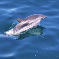 Dolphin Tour Gibraltar