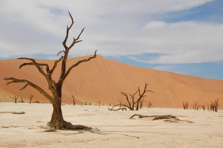3 jours de camping dans le d sert namibien et safari for Dans 3 jours