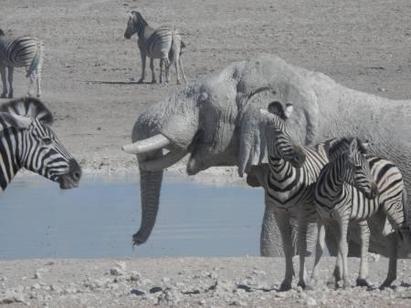 3 Tage Camping-Safari In Etosha