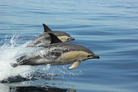 Dolphin Watching Tour - Sagres