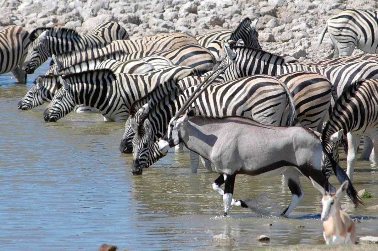 Etosha Camping Safari Africa