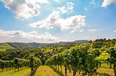 Bairrada Wine Tasting Vineyard