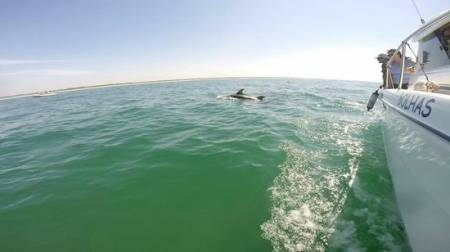 3-Hour Dolphin Watching Boat Tour In Sesimbra With Snorkelling