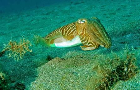 Kalmar Und Tintenfisch Angeln – 4 Stunden – Portimão