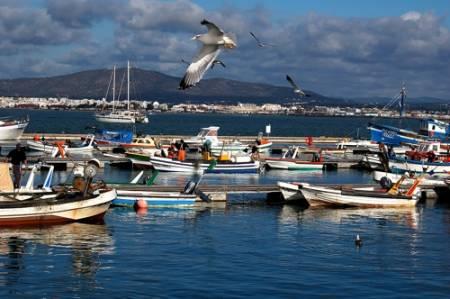 De Olhão: 3.5 Horas De Viagem Da Ria Formosa Para As Ilhas Armona E Culatra