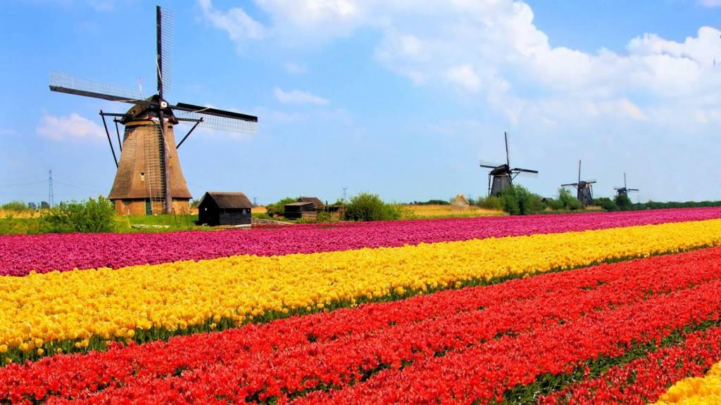 Go back to Netherlands