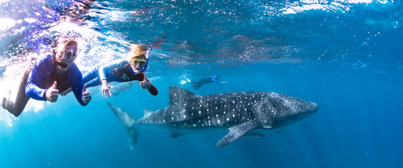 Ningaloo Reef Western Australia Whale Shark Boat Tour