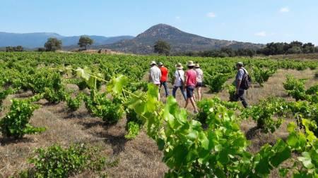 Depuis Barcelone: Visite Du Vignoble Naturel Du Comté D'empordà