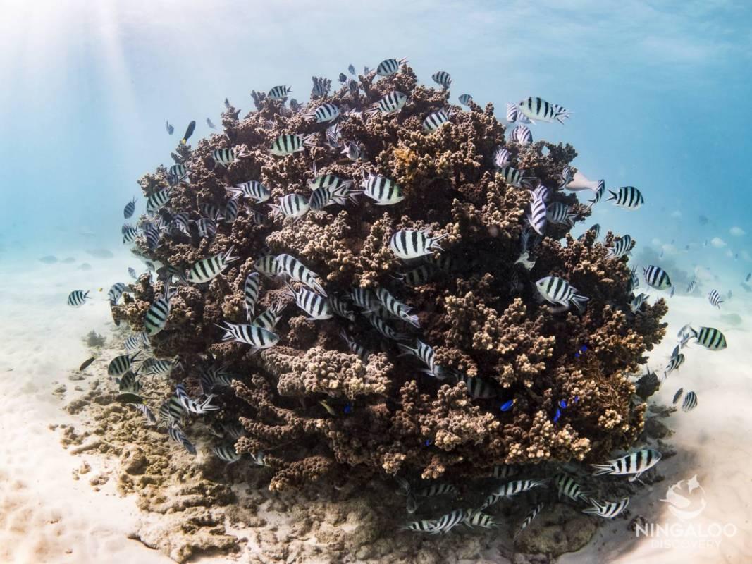 Ningaloo Reef Western Australia Marine Life
