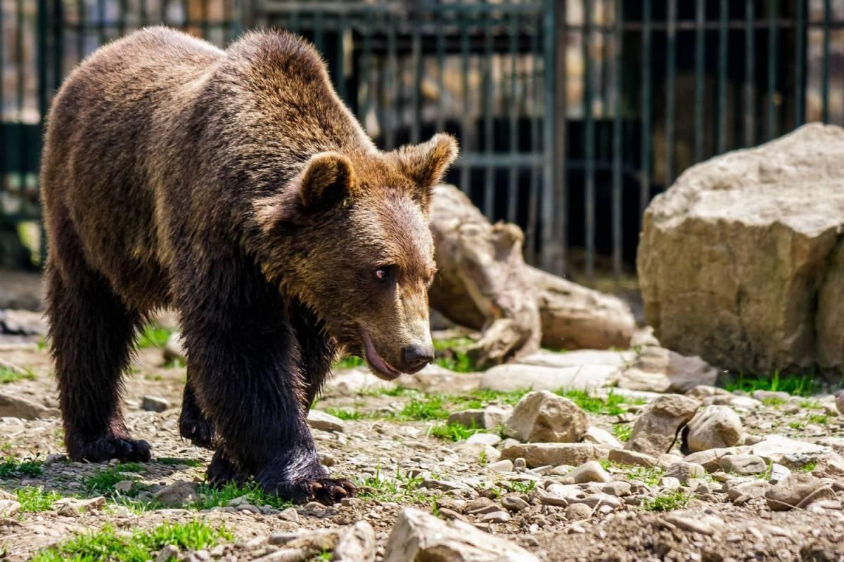 Bear Sanctuary