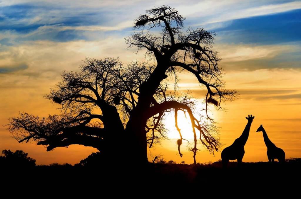 Geh zurück zu Botswana