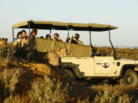 Big 5 Safari Excursion D'une Journée Au Départ De Cape Town