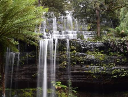 From Hobart: Excursion To Mount Field National Park And Styx River Valley