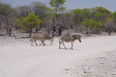 6 Dias De Sabor Namibiano
