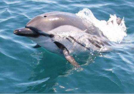 Dauphin Safari, Gibraltar