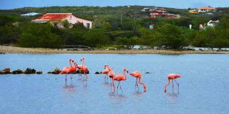 Beach And Eco Tour Of Curacao