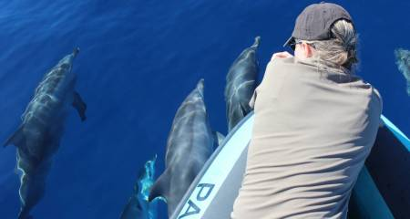 Whale & Dolphin Watching, Madeira Island
