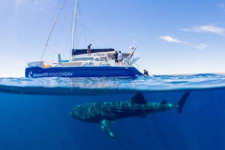 From Exmouth: Catamaran Tour In Ningaloo Reef To Swim With Whale Sharks