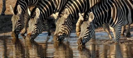 Savuti Camp Botswana