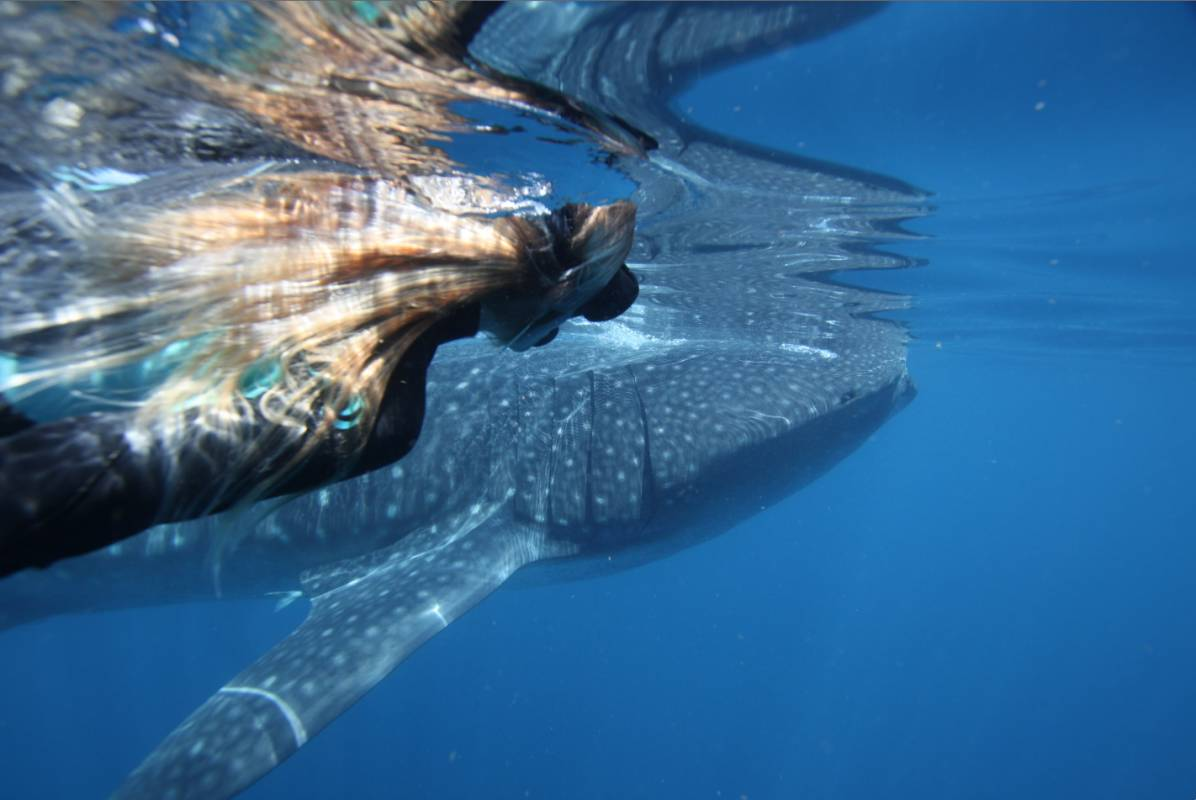 From Exmouth: Powerboat Tour In The Ningaloo Reef To Swim With Whale Sharks