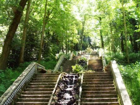 Buçaco Wald – & Kurie