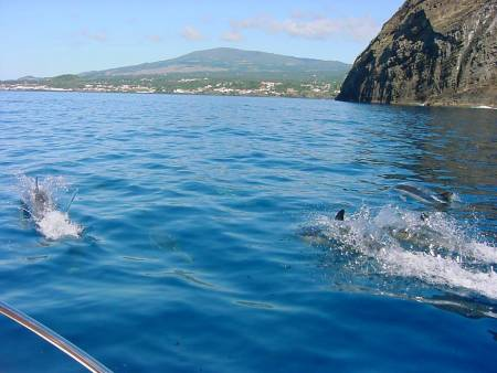 Swimming With Dolphins In Island Of Terceira, Azores