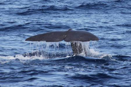 Terceira Island: 3-Hour Dolphin & Whale Watching Boat Tour In Azores