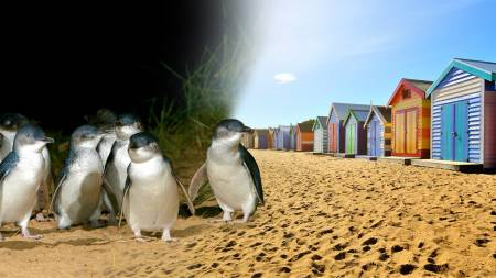 From Melbourne: Phillip Island Penguin Parade, Moonlit Sanctuary & Seal Rocks Day Tour