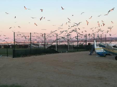 Olhão: 2-Stündige Bootsfahrt In Der Ria Formosa