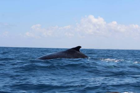 Daily Whale Whatching With Engine Dhow And Snorkleing, Mozambique Island