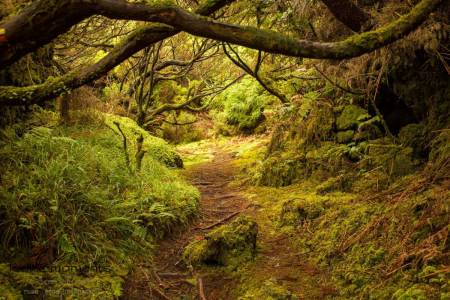 Walking Trails. Enjoy The Interior Of Terceira, Azores