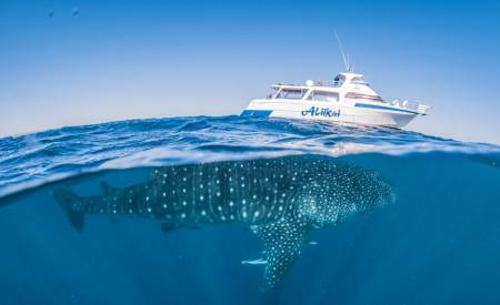 We have the best whale shark tour in Exmouth