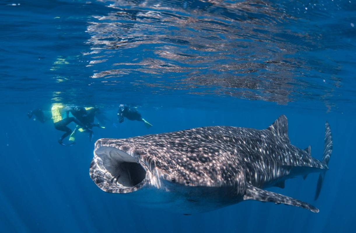 Best Whale Shark Tour Exmouth
