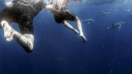 Swim with dolphins in Ponta Delgada, Azores