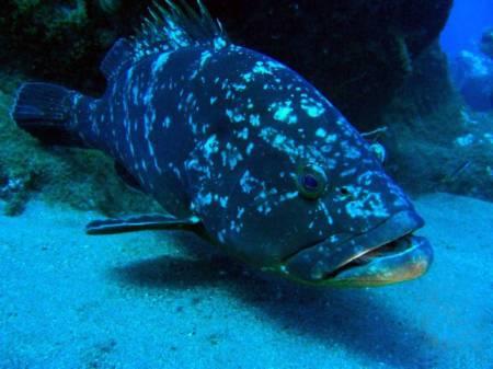 Scuba Diving São Miguel Island