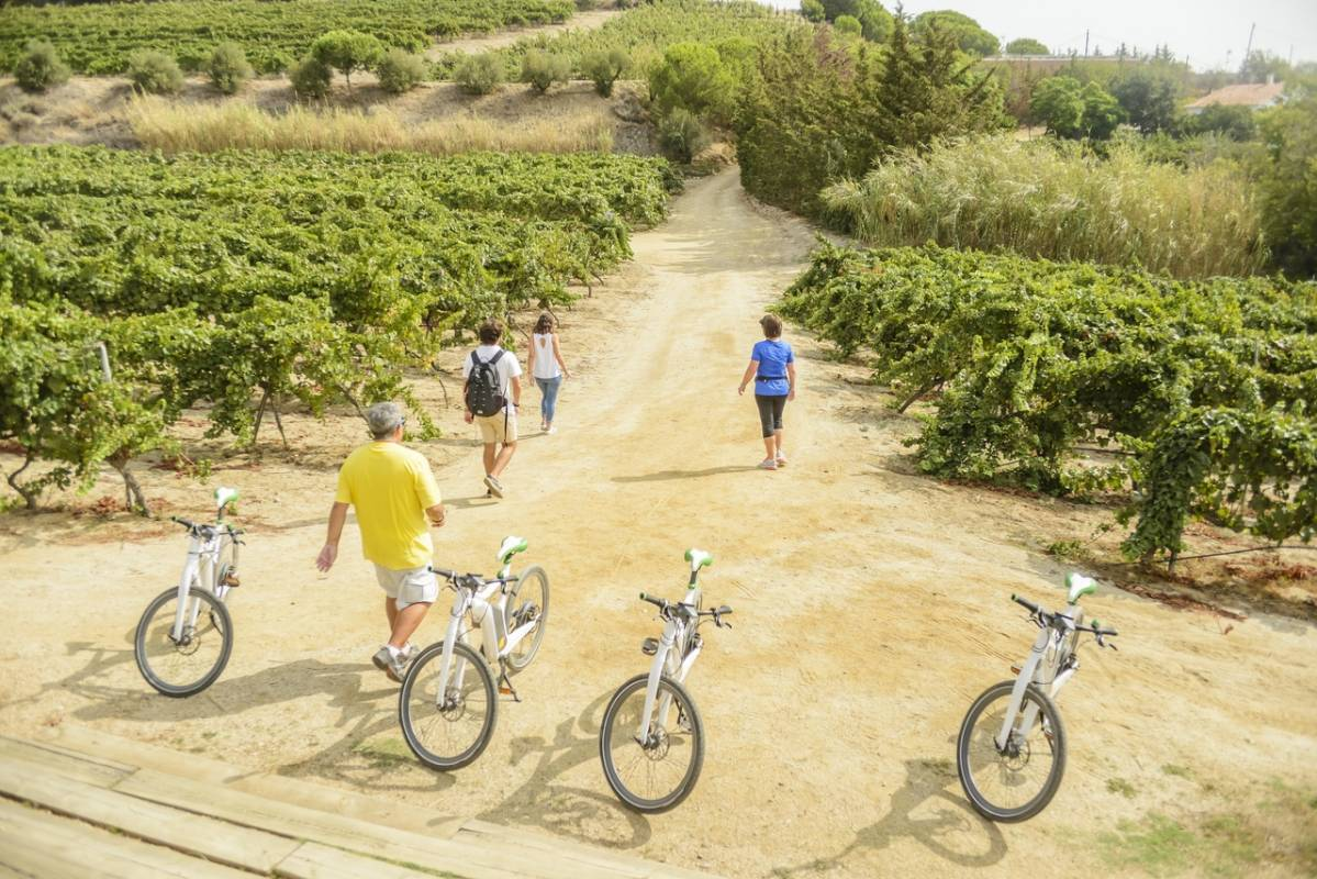 Winery Barcelona Ebike wine tasting tour