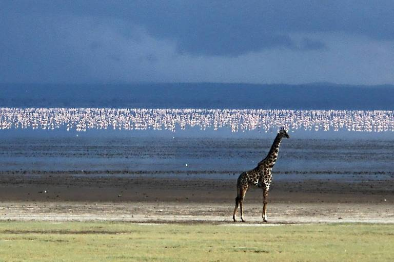 3 Days Optimistic Tanzania Safaris Lake Manyara Tarangire And
