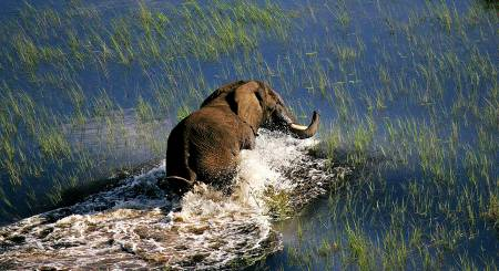 4 Days Fly-In Safari Okavango Delta