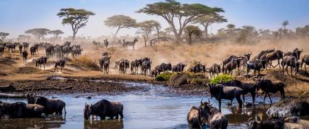 Tanzania Wildebeest Migration River Mara Crossing