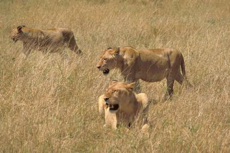 3 Days Optimistic Tanzania Safaris: Lake Manyara, Tarangire And Ngorongoro Crater