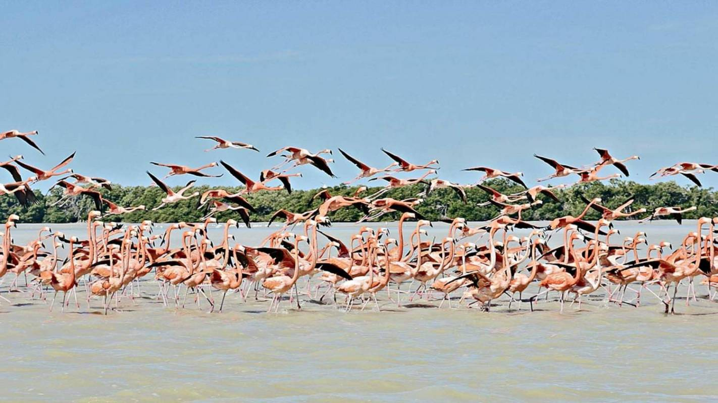 5 Days Of Flamingos, Henequen And Mayan Culture, Mexico