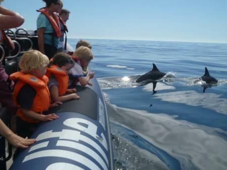 1H30 Delfinbeobachtung In Lagos – Algarve
