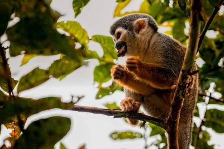 4 Days Cuyabeno Reserve - An Unforgettable Journey In The Ecuadorian Amazonas