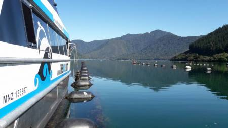 From Havelock: 6-Hour Cruise In Pelorus Sound