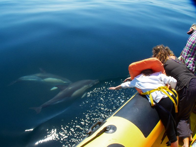 Algarve Dolphin Watching - Get Out To See And Meet The Dolphins
