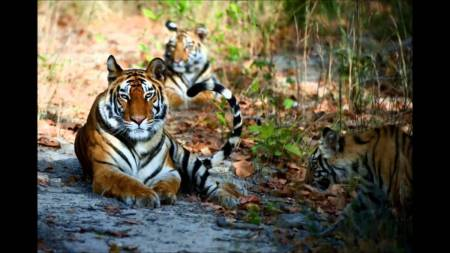 Jungle Safari In Chitwan National Park- 2 Nights 3 Days