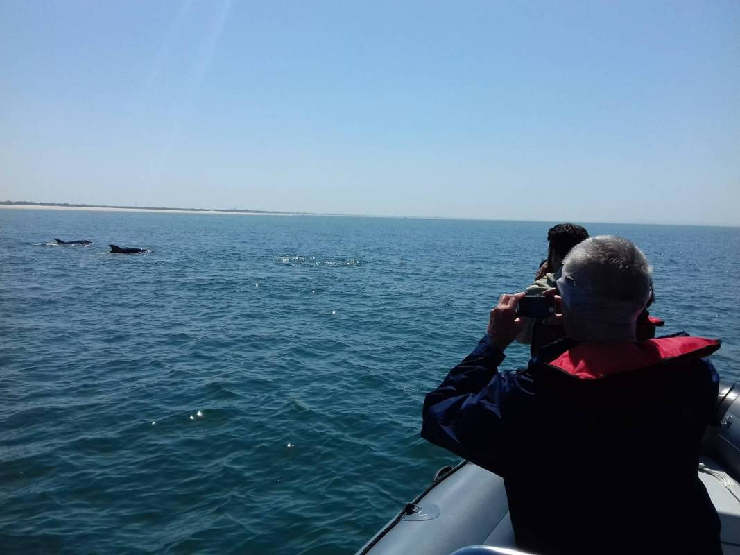 Daily Dolphin Watch And Stand Up Paddle Tour In Sesimbra
