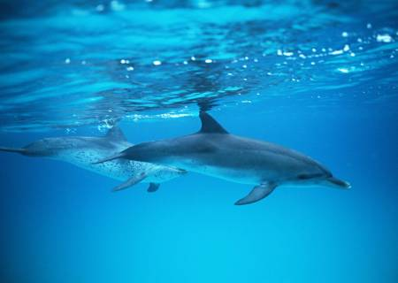 Gran Canaria: Dolphin Search