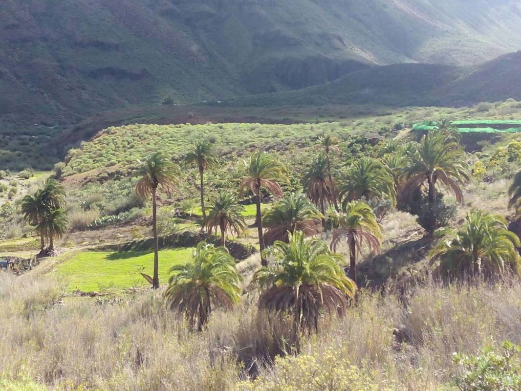 Gran Canaria Jeep Safari