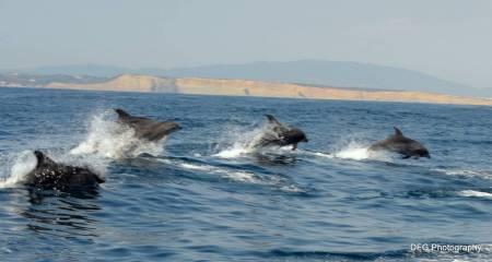 Delfin- Und Walbeobachtungstour Von Lagos